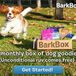 cool pet stuff, pet goods